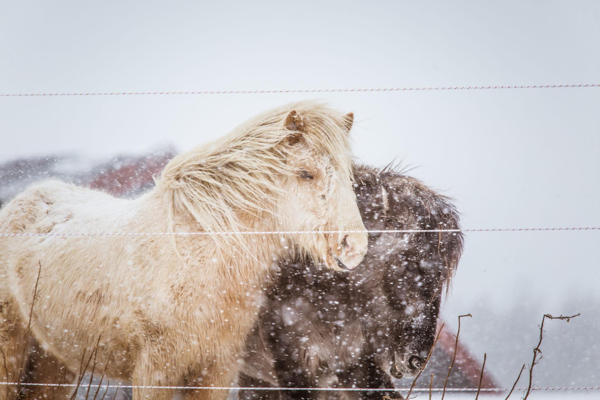 ponit talviturkissa